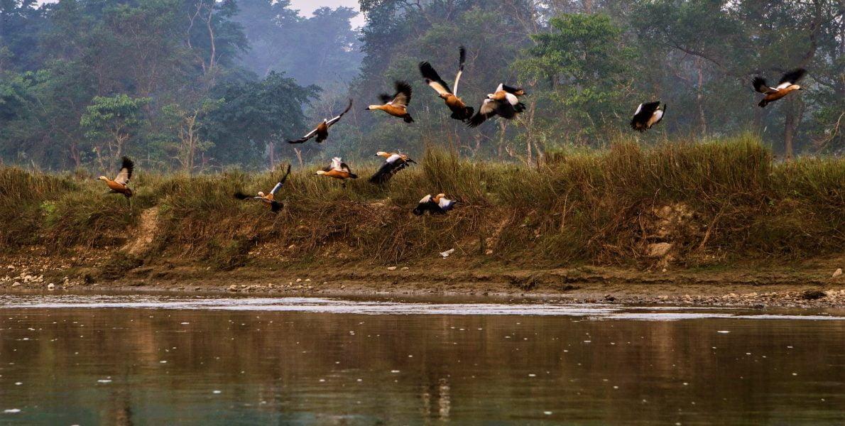 Birds flying in Chitwan National park