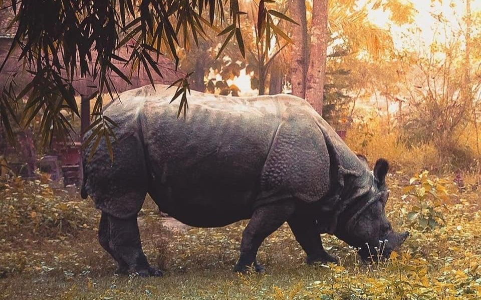 Nepal Tour[ Nepal Adenture Holiday] - One horned Rhinocerous in Chitwan National Park